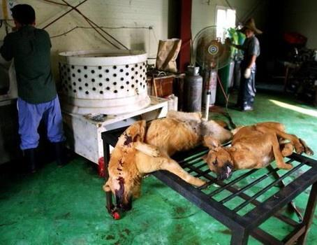 korean dog eating tradition essay South korean tradition of eating dog meat to beat the heat draws international criticism  known as 'bok-nal', south koreans eat dog meat during the hottest days of.