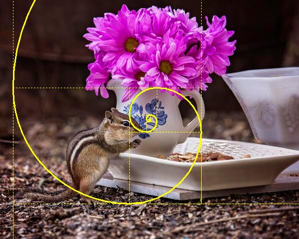 chipmunk golden spiral
