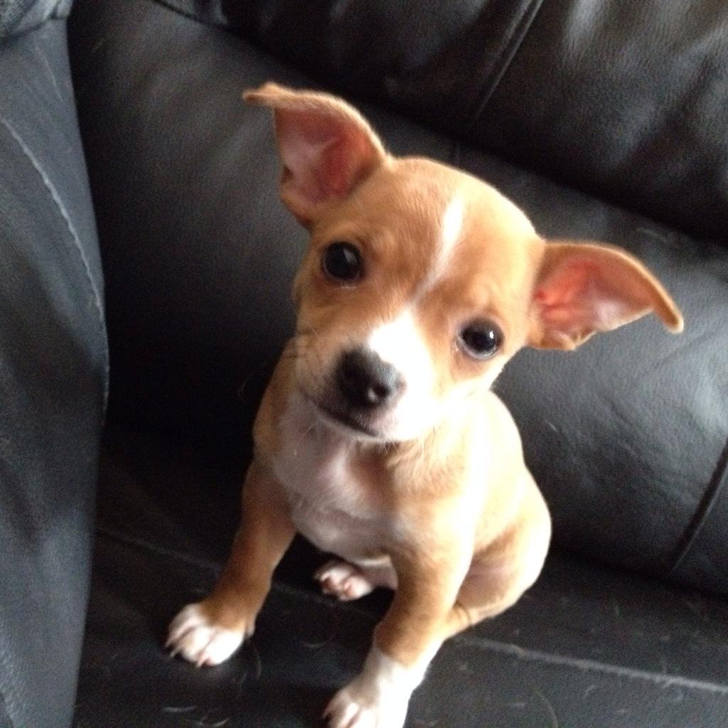 @fido4e do you like my friends pup Gracie? http://t.co/2RVoUaISIV