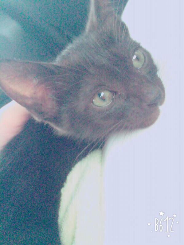 とっても男前な黒猫クンの里親になってくれる方を探しています。多分生後2ヶ月位?カギ尻尾のおチビちゃんです。当方高槻在住。その近辺で家族として迎え入れてくださる方、ご連絡お待ちしております。 http://t.co/WrzZyNQIAi