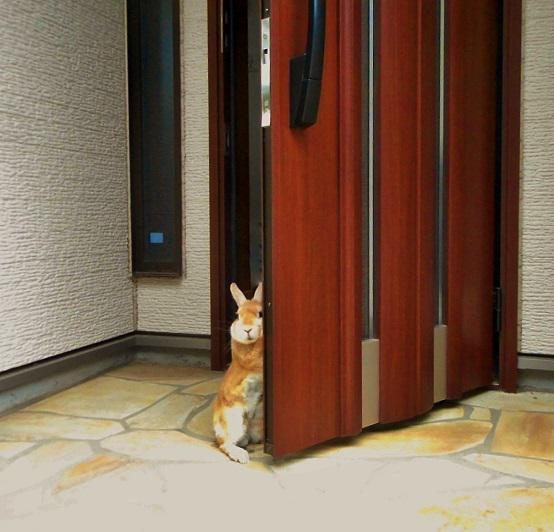 小動物が悲しげに見送るので出勤するのがツラい。 pic.twitter.com/m8WBTUTukC