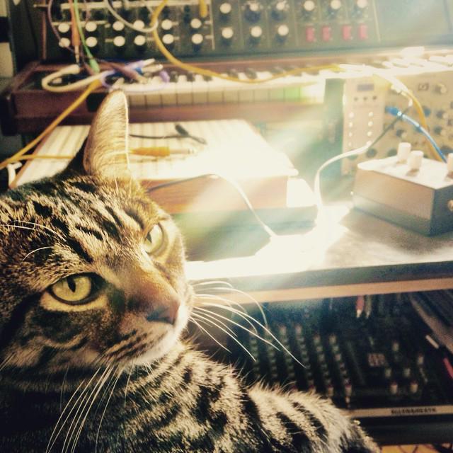 「シンセサイザーと猫」というコンセプトで集められた写真達 こんなん絶対かわいいじゃないですか http://t.co/nBMY0ZD9OU http://t.co/WyCiH9Pzrd
