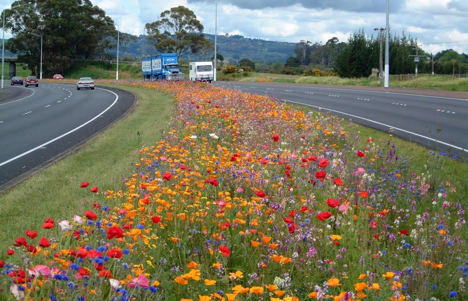 Dear @corkcitycouncil pls do this on the link road #urbanwildflowers to save money on grass cutting & save bees http://t.co/s9GNkBJHbC