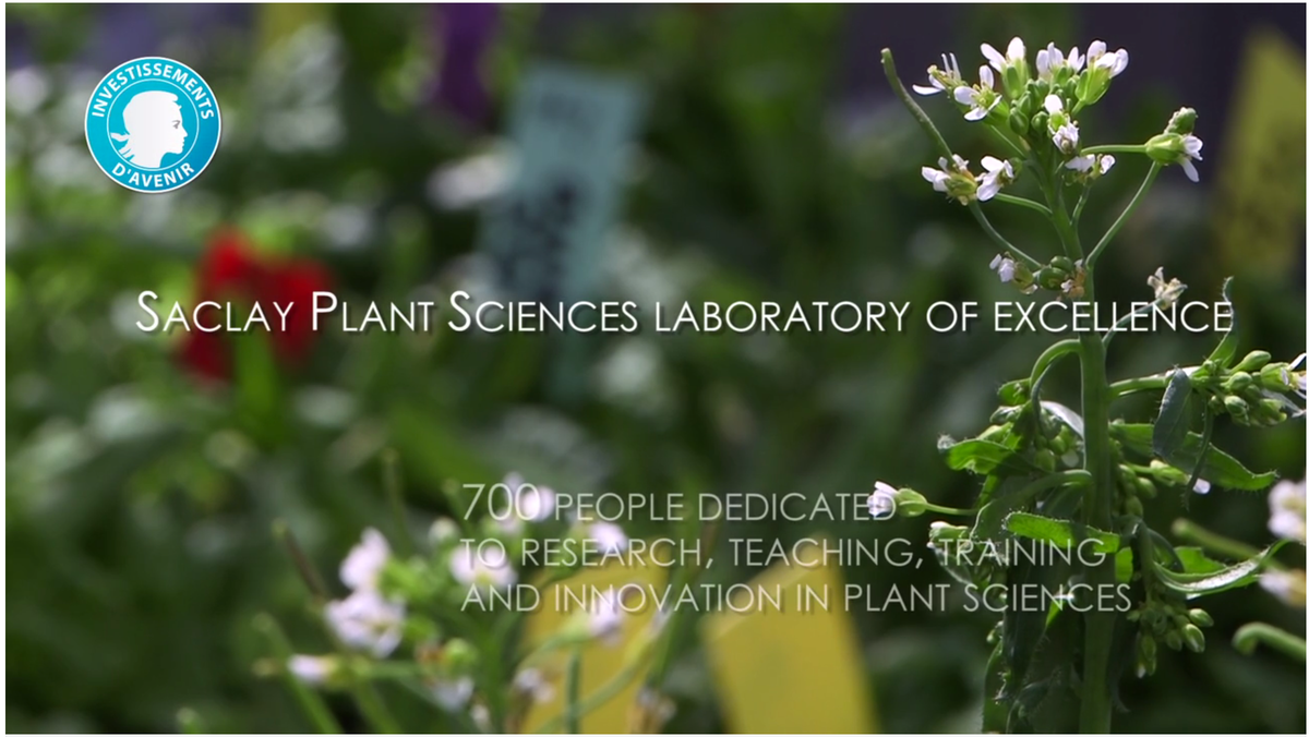 #ICAR2015, Saclay Plant Sciences at the Arabidopsis conference, 5-9 July https://t.co/xQ6cHN0phc http://t.co/mp4KvZAjgL