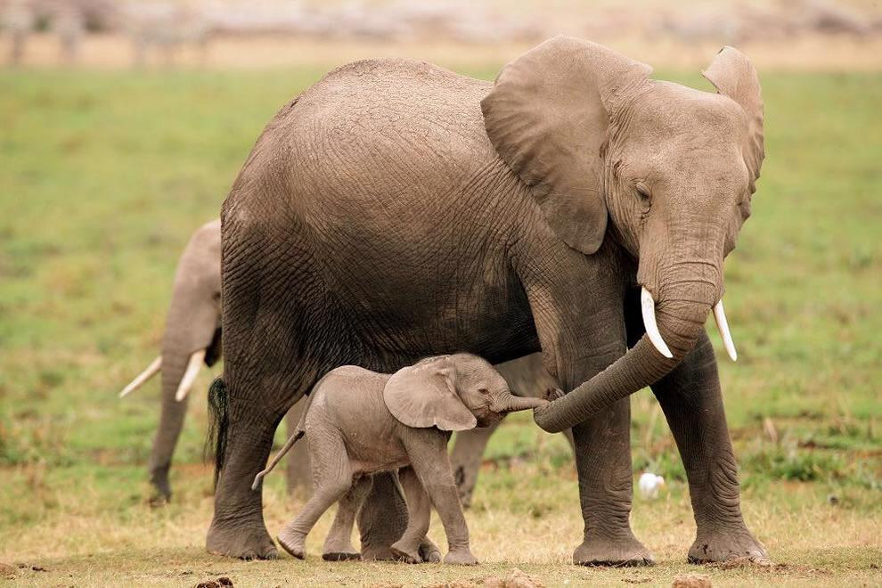 simply elephants on twitter happy father s day to all different