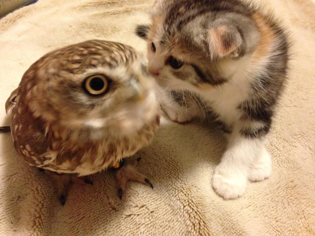 фото совят с котятами #9