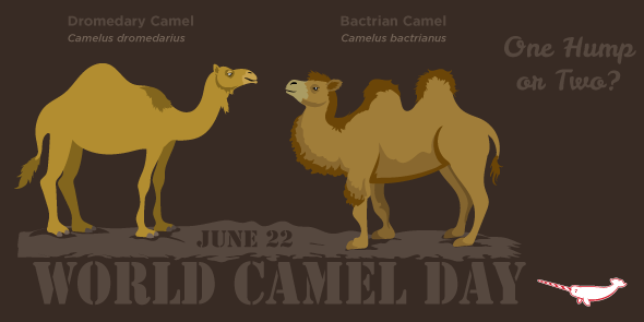 Peppermint Narwhal On Twitter Happy WorldCamelDay Bactrian