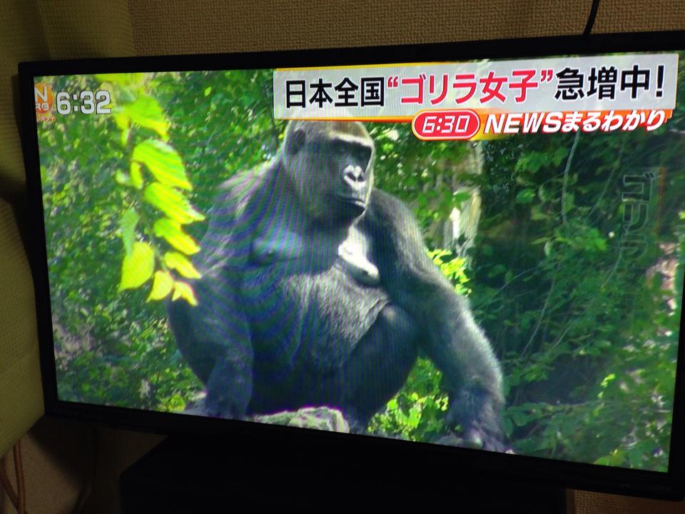 ゴリラ女子急増中!? http://t.co/DwtOMFP0V0