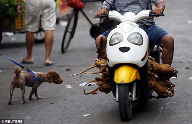 दशौं हजार कुकुर मारेर चीनमा 'डग मिट फेस्टिबल' मनाइयो