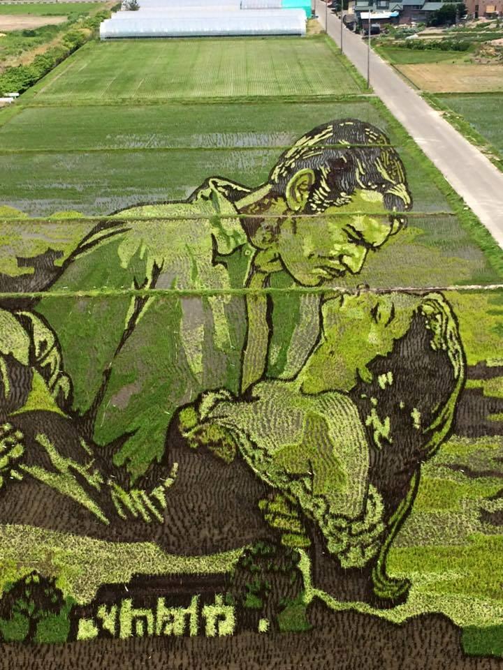 青森県で毎年恒例の「田んぼアート」。今年は風と共に去りぬとスターウォーズでしたね!いや、、、すごい、、、どうやったらこんな緻密な絵柄を「植えられる」んでしょう!アクセスなどはこちら→ http://t.co/nanzyloxU3 http://t.co/0Zcis8IXGT