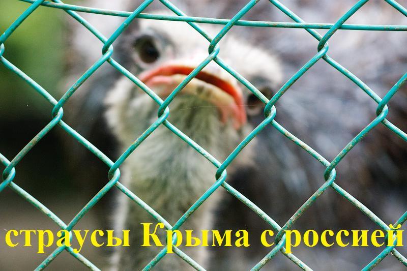 """Минфин Чехии заморозил прибыль конюшни Кадырова: глава Чечни заявил о """"грубейшем нарушении прав лошадей"""" - Цензор.НЕТ 7347"""