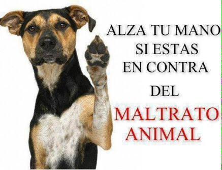 #NoAlMaltratoAnimal Repudiamos los hechos sucedidos en @MaskotaMexico #MaskotaMaltrataAnimales http://t.co/RRcRwlUWXc