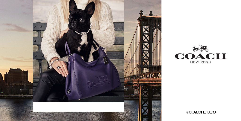 Meet @ladygaga's French bulldog @missasiakinney, star of our new #coachpups campaign. (Photo: #StevenMeisel)