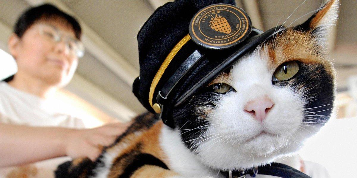【訃報】「たま駅長」逝く 世界的に愛された和歌山電鉄の三毛猫(画像)  http://t.co/Y1puZKWXZX http://t.co/n0FAsnyaUY
