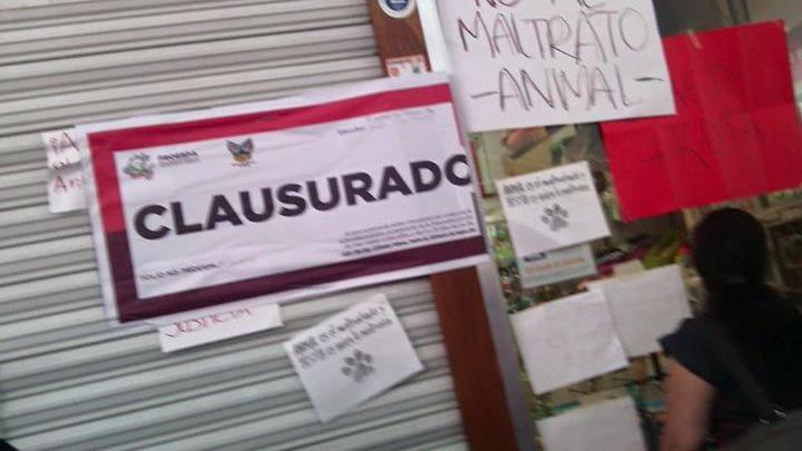 Felicito al gobernador @Paco_Olvera por haber clausurado la tienda Maskota. #MaskotaMaltrataAnimales @politicamx http://t.co/qevKkky5gZ