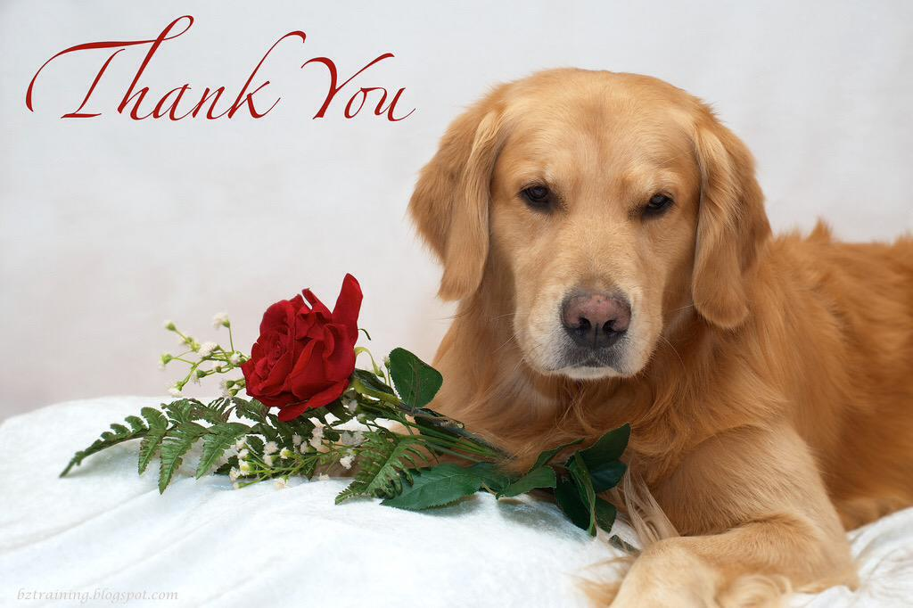 Картинки с собаками спасибо, бухгалтера открытки