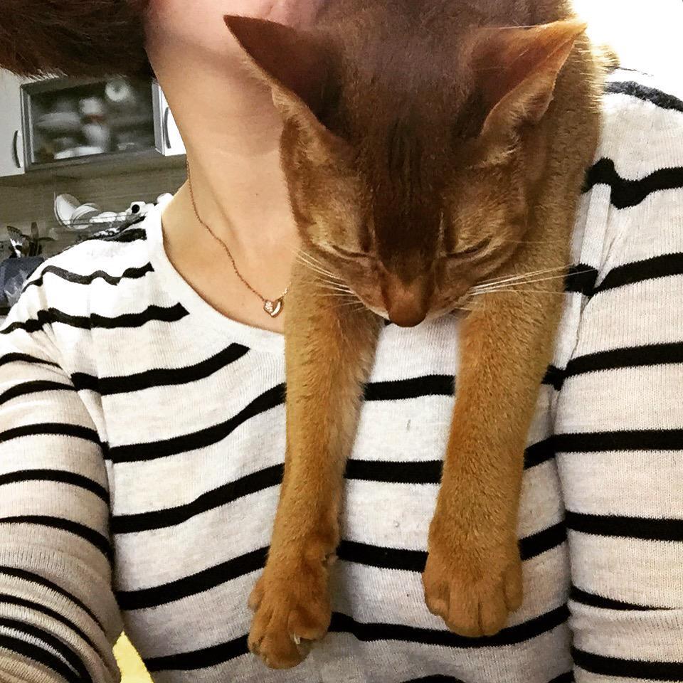 리빙포인트! 장마 기간엔 고양이를 어깨에 걸쳐 놓으면 잘 건조됩니다. http://t.co/Fltq09uX5h