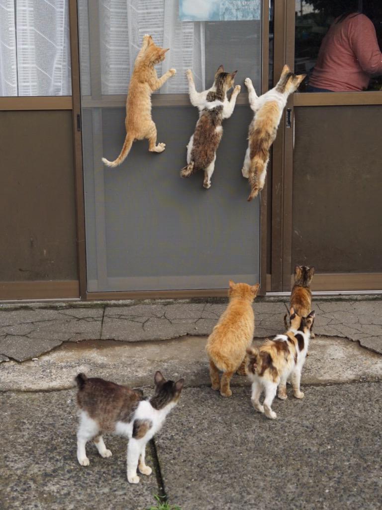 ご飯の準備中、かぶりつき猫 pic.twitter.com/kpnXonspmq