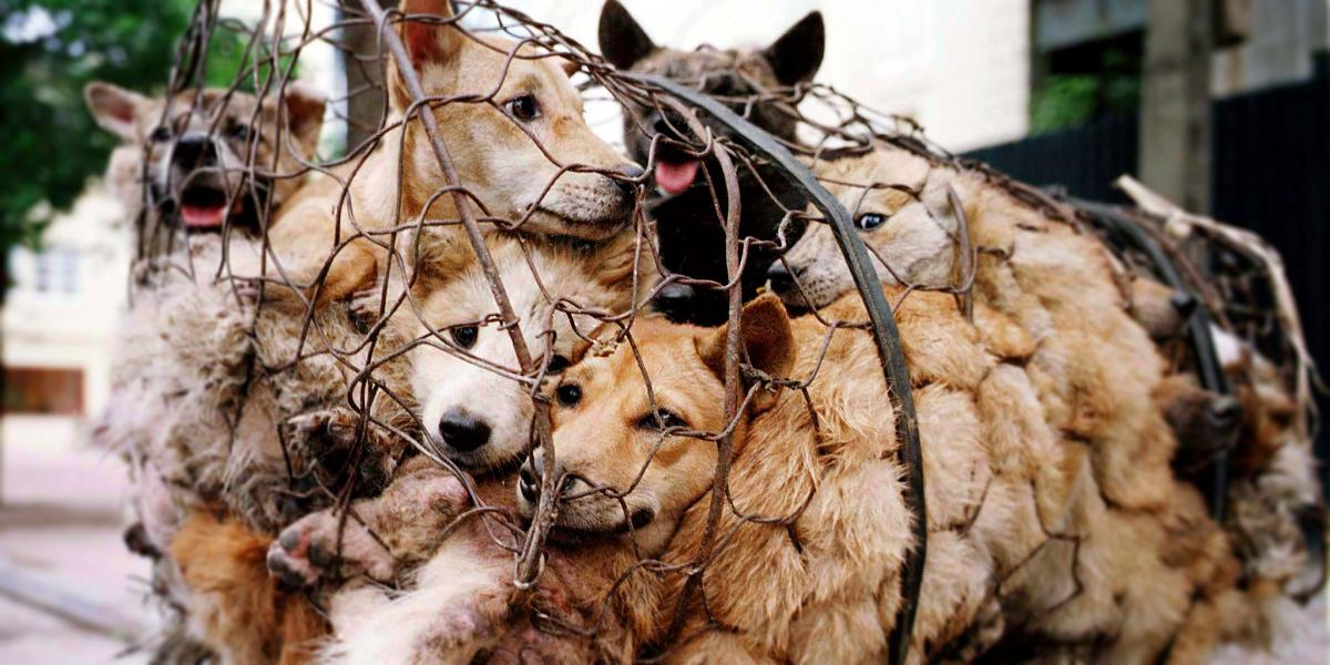 How the Yulin Dog Meat Festival is a Wake Up Call for the World http://t.co/8QGtuGDHcH by @AnimalsAus #StopYulin2015 http://t.co/WJHuhzbHeH