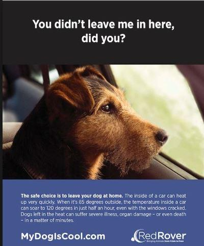 RT @seabiscuit7: @DENISE_RICHARDS Please remind ppl do not leave #DOGS in cars.  Some died yesterday! http://t.co/yaM824kxn6