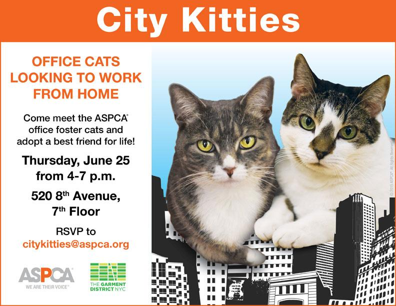 One hour from right now, you could find the love of your life. Meet the office foster cats of the @ASPCA http://t.co/GpkDGW9yD6
