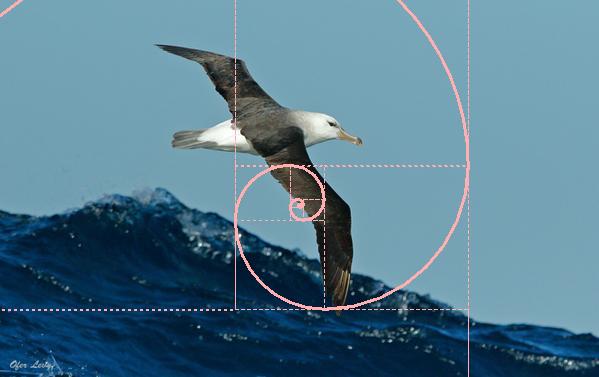 golden spiral eagle