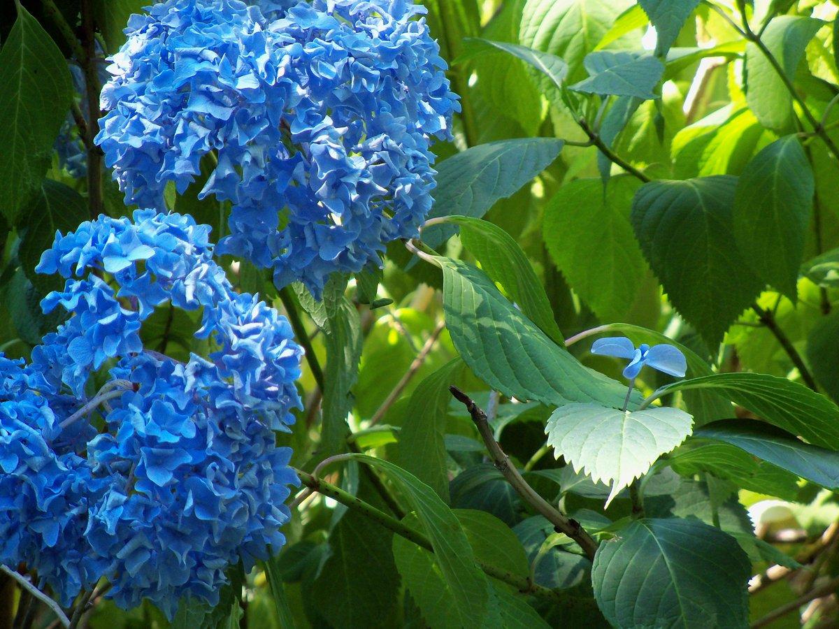 @JoSchenck  U r so spoiled. Flowers from my backyard for u :( http://t.co/Zcpx0Qi5Wj