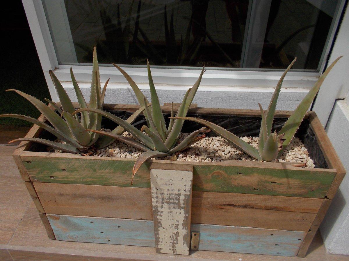 Aloe vera - #trois plantes qui produiront des petites crèmes à Aruba #mathphoto15 http://t.co/ByMkpaihJj