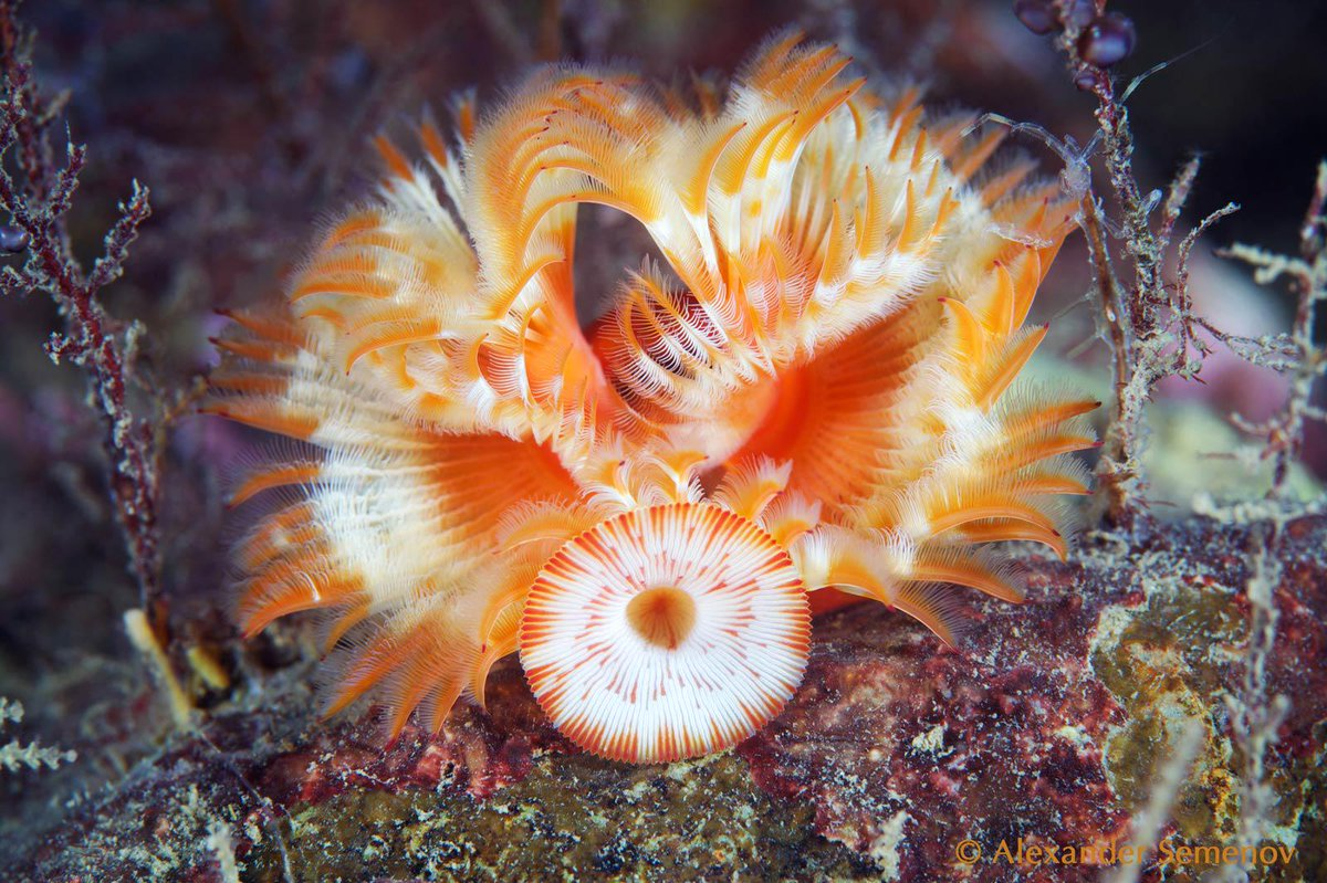 Celebrate the 1st Annual #InternationalPolychaeteDay with us on July 1! http://t.co/cwmVk7SXtC http://t.co/K2S74Z0JFD