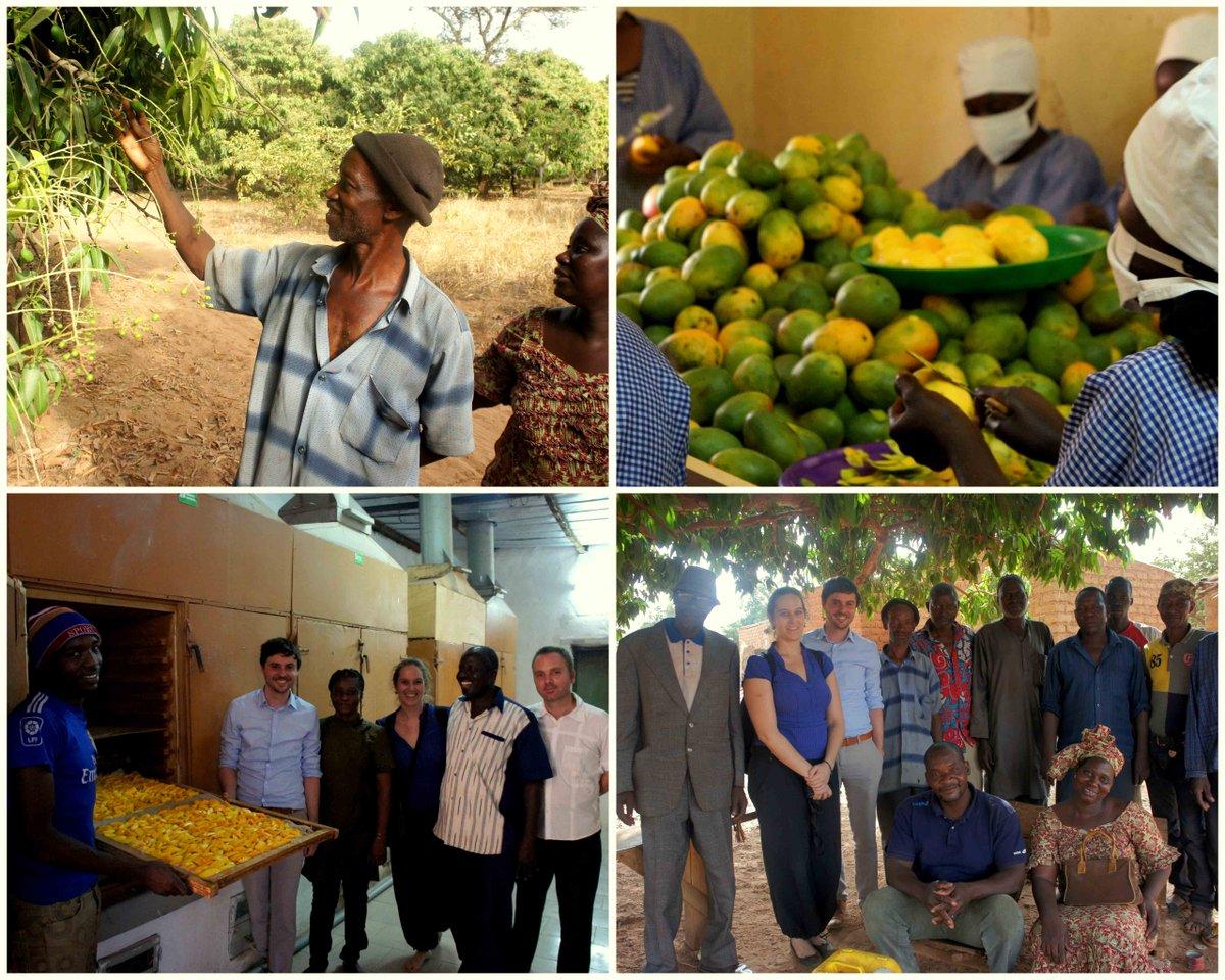 Biolog. Mangoproduktion in #Burkina schafft Arbeitsplätze und sichert Einkommen. #WIPA mit #Gebana #EYD2015 http://t.co/J02bMqdMWE
