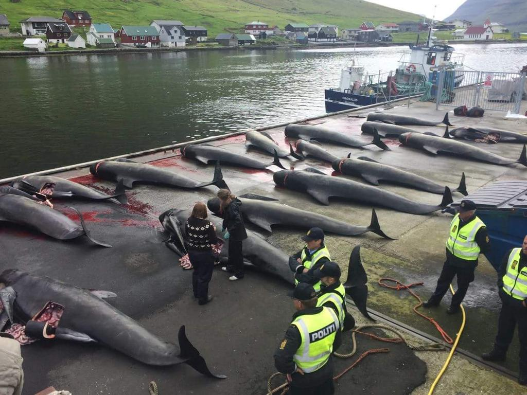 Top story: @h0t_p0ppy: '#Denmark why do you aide the slaughter of whales?  You … https://t.co/htW04hhGpn, see more https://t.co/nZiOJpQmTG
