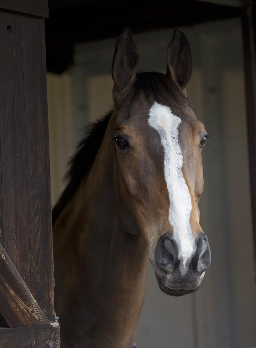 Devastated to hear the news about Kauto Star. He was a true champion, and will never be forgotten. RIP lad. http://t.co/E9h3vyI5AY