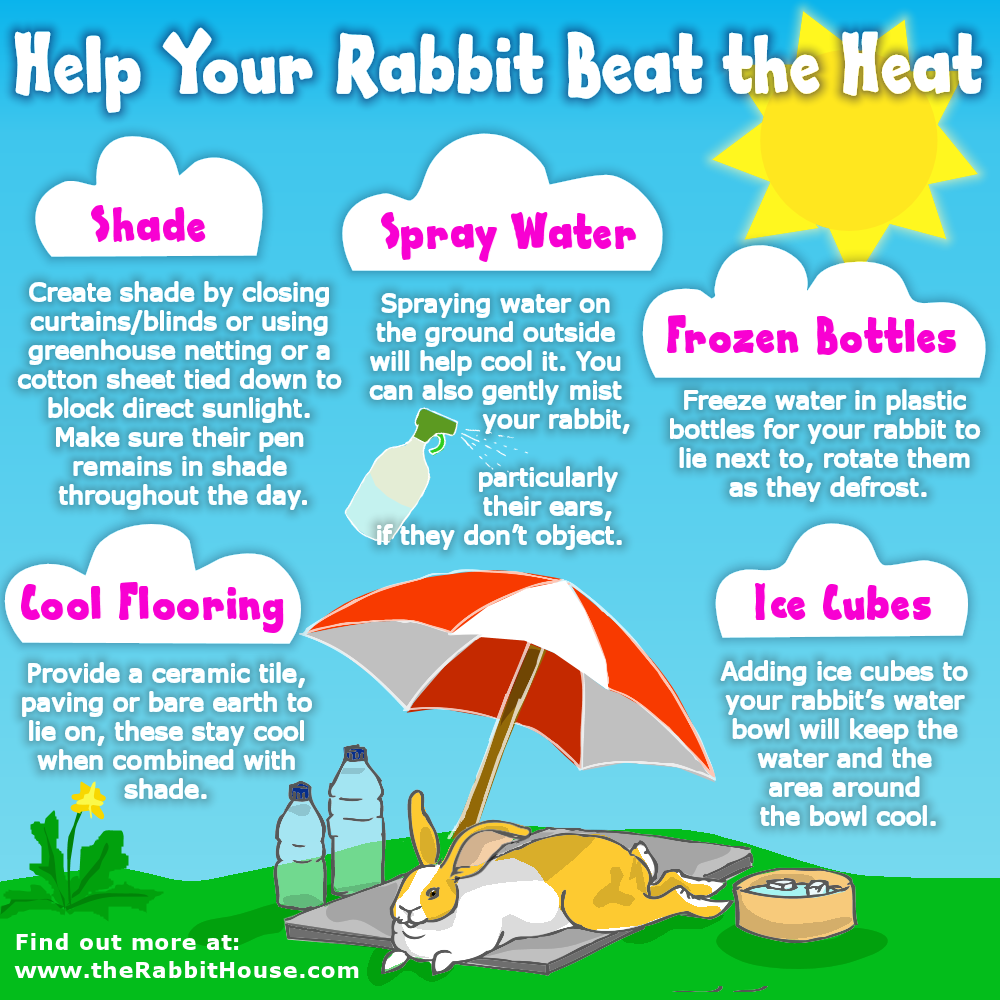 keeping your rabbit cool in the summer