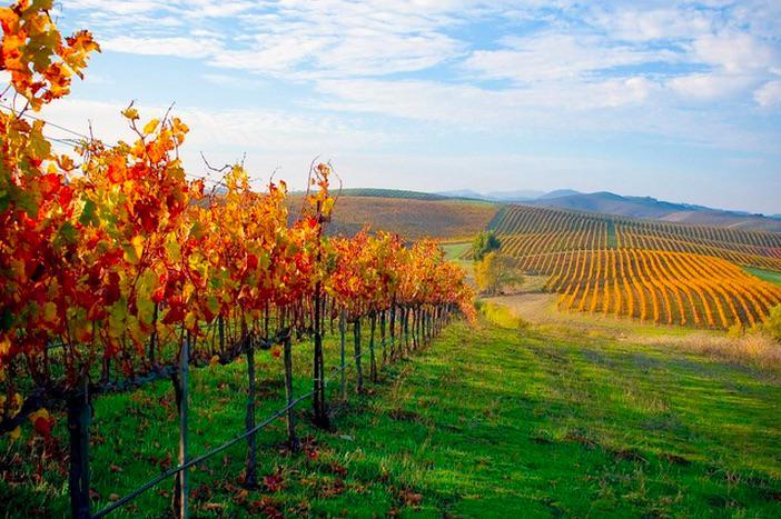 Celebrate @CarnerosWine's 30th annivrsry at @diRosaArt! #art #WineWednesday #WineCountry #wine http://t.co/NbpFR9T8Ik http://t.co/Or6pKDGDTA
