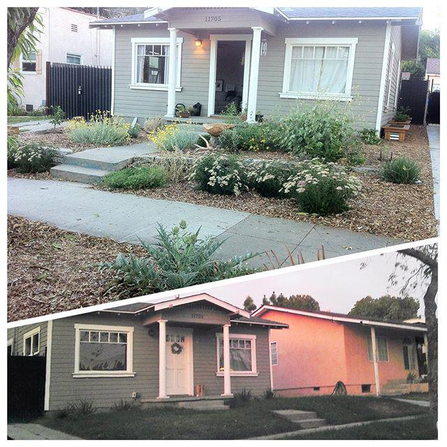 Pls RT @KPCC: Drought-friendly yards: Check out this before/after. Share urs with #myyard http://t.co/QK2OWBNm0K