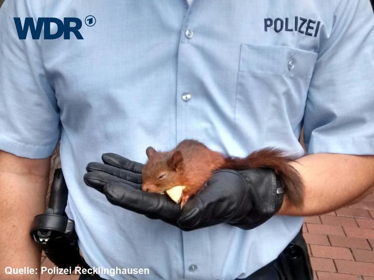 Eichhörnchen verfolgt Frau, Frau ruft Polizei, Eichhörnchen schläft ein. #CutenessOverkill http://t.co/oZQDcCQhu6