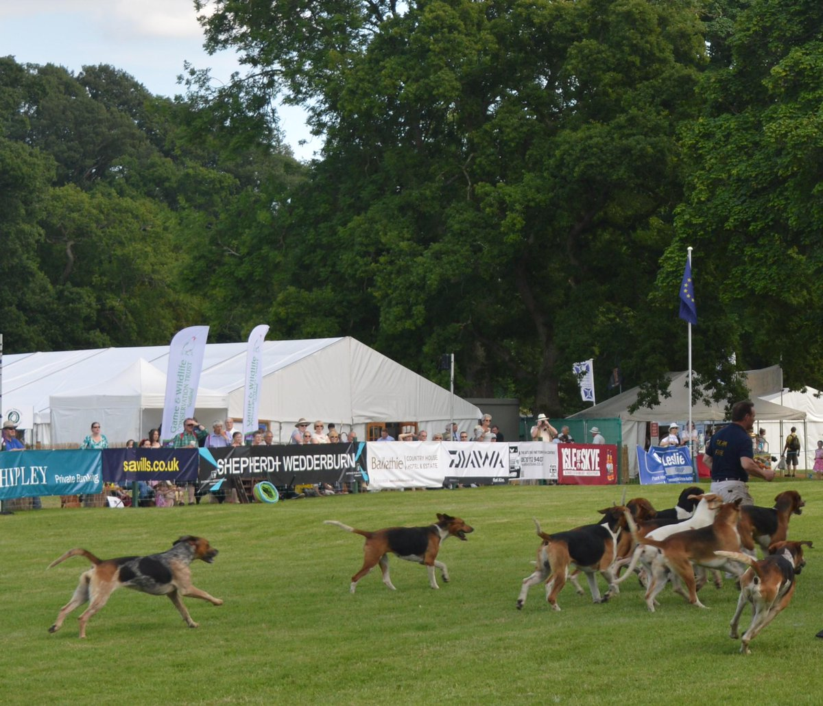 Fox hounds put on a show for the crowds at the Scottish Game Fair.   @ScotGameFair @SconePalace http://t.co/ykWreDlAyC