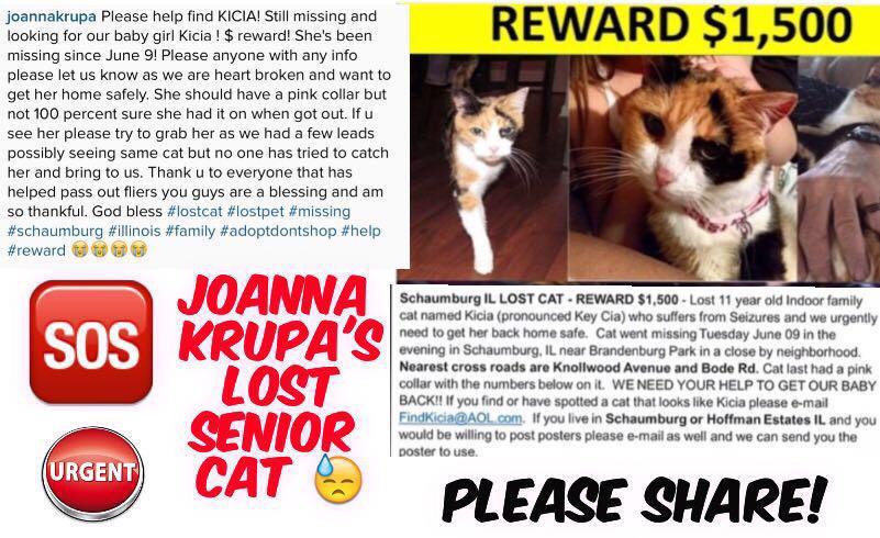 RT @Freja_Petersen: Pls help find KICIA! >@joannakrupa #lost #cat 💔🐱 Still missing! REWARD! #schaumburg #IL Info↣https://t.co/UOblt0fQDD  h…
