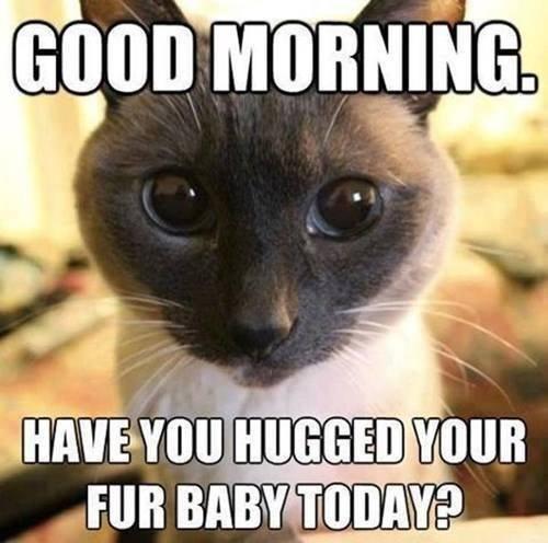 How often do you hug your kitty??? http://t.co/EKuSsMPhPO