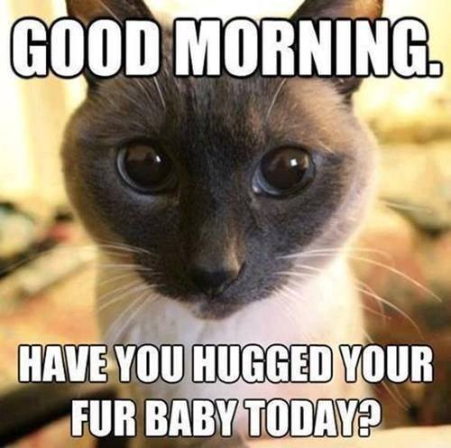 How often do you hug your kitty??? http://t.co/8EcvUGJaPq