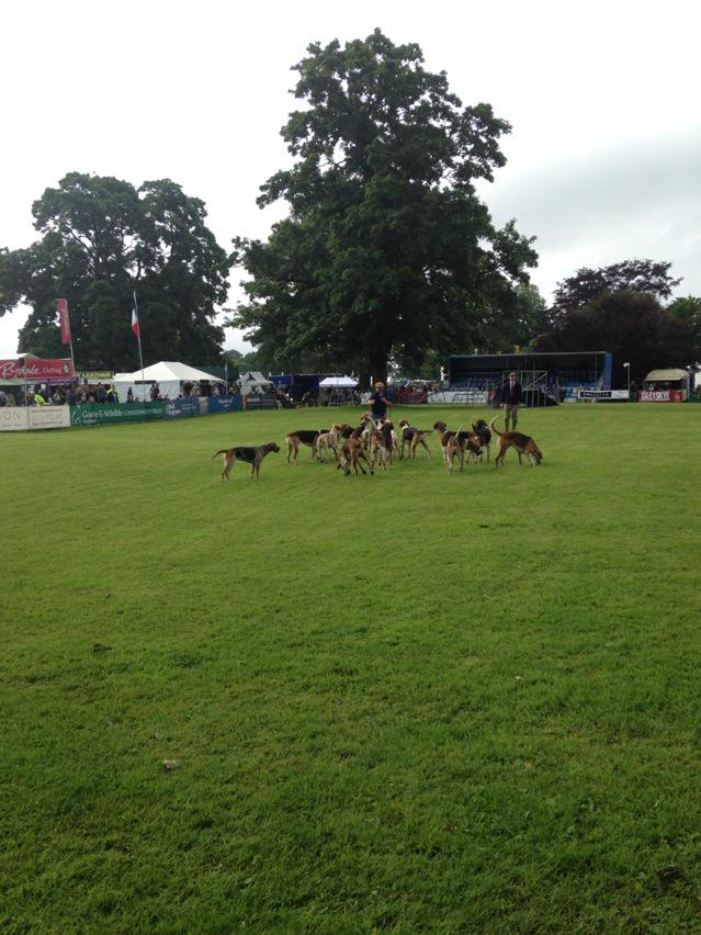 Fife fix hounds @ScotGameFair. http://t.co/mprYvuEd9I