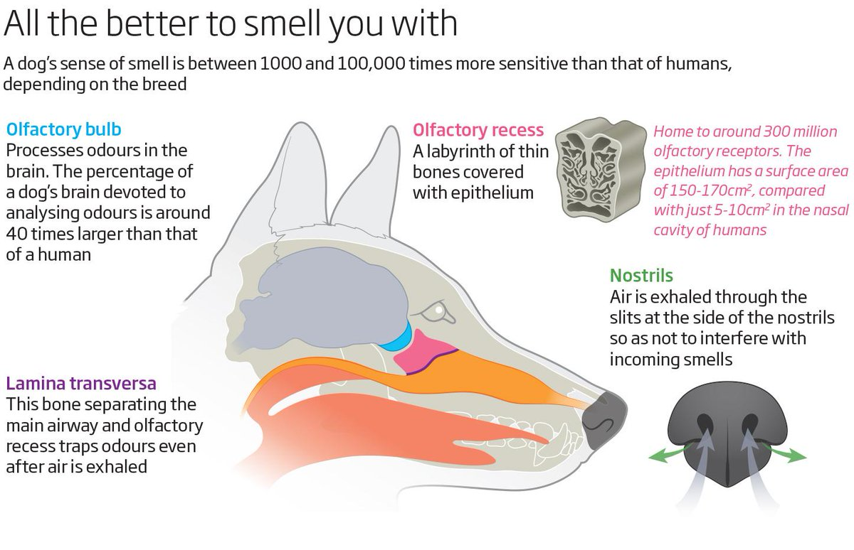Dog Diagram Nose - Auto Electrical Wiring Diagram •