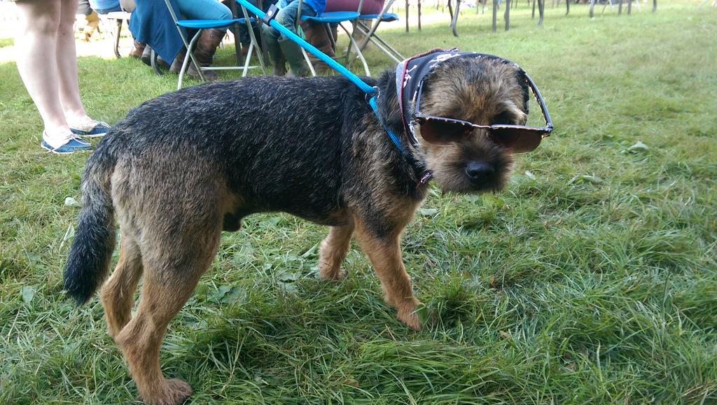 Coolest dog at @ScotGameFair  today http://t.co/KReLl0e0Mj