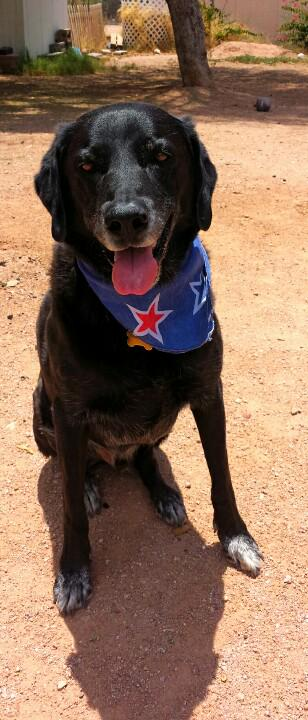 #ProudAmerican #IndependenceDay #dogs @FoxNews @KFYI  #RedNationRising #PJNET @960ThePatriot #AZ #July4 http://t.co/OIJxgHAJ0g
