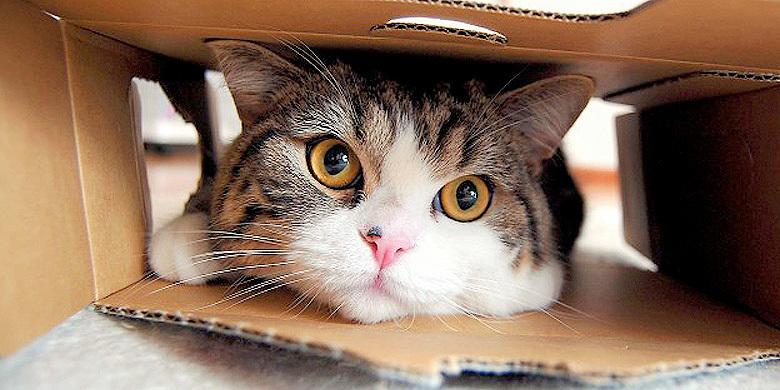 Self-Packing Cats – A Cute Compilation Of Felines Squeezing Themselves Into Bags And Boxes http://t.co/VNDGP3HOfl http://t.co/npeTJ2aWIy