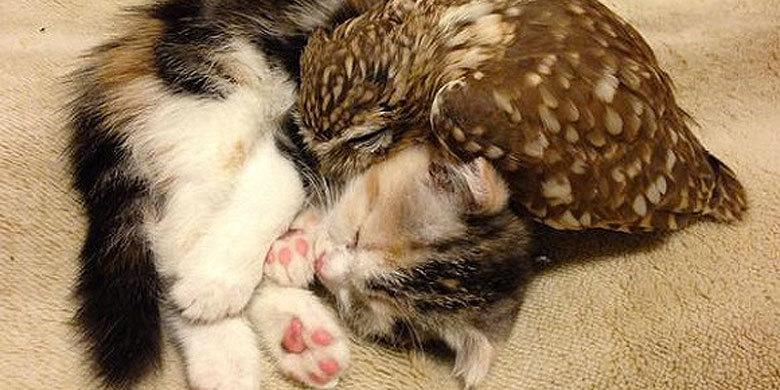 Way Too Cute! Kitten And Baby Owl Make For The Most Adorable Best Friends Ever http://t.co/WJkA3A9J9U http://t.co/uqcSwuqlxK
