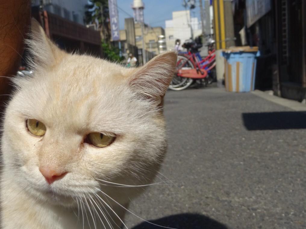 迫りくる猫の恐怖。 pic.twitter.com/XI4HNSe1Oa