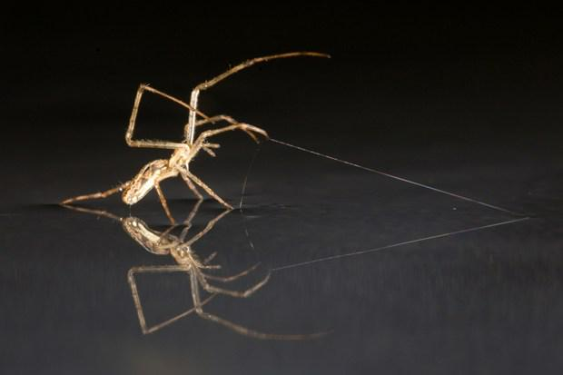 RT @WiredUK: Spiders 'sail' on water to spin long-distance webs http://t.co/JBph1WrgMN http://t.co/p98gRiGEHK