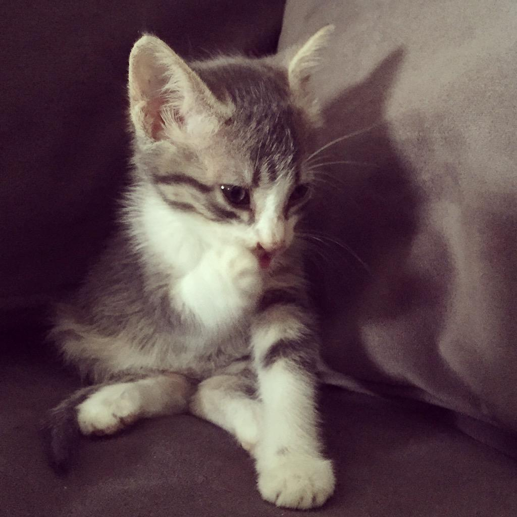 Psssst. Did you hear? It's #KittenWeek!  Let's see those kittens! http...