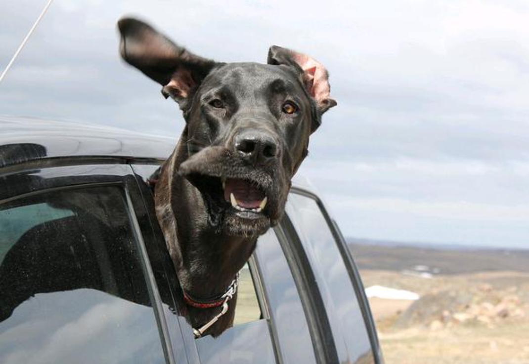Днем, смешные фото собак в машине